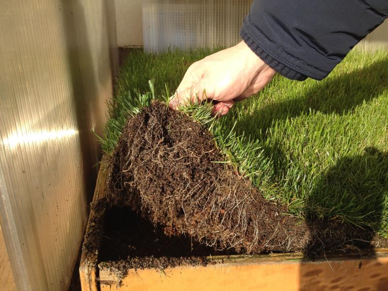 Roots Growth below PowerGrass backing